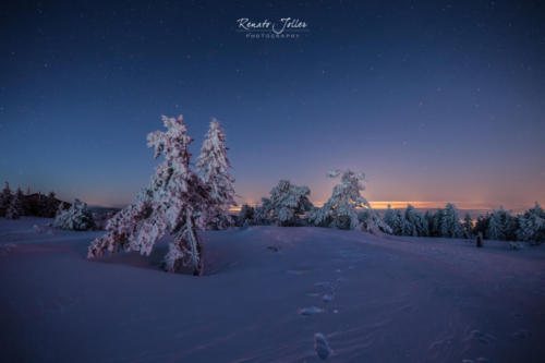 Lappland Black Forest