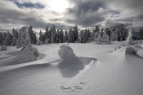 Black Forest Lappland
